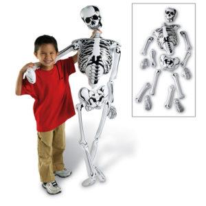 Занятия по анатомии с детьми